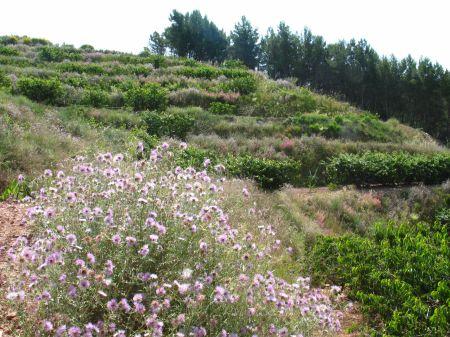 muntanya + flors